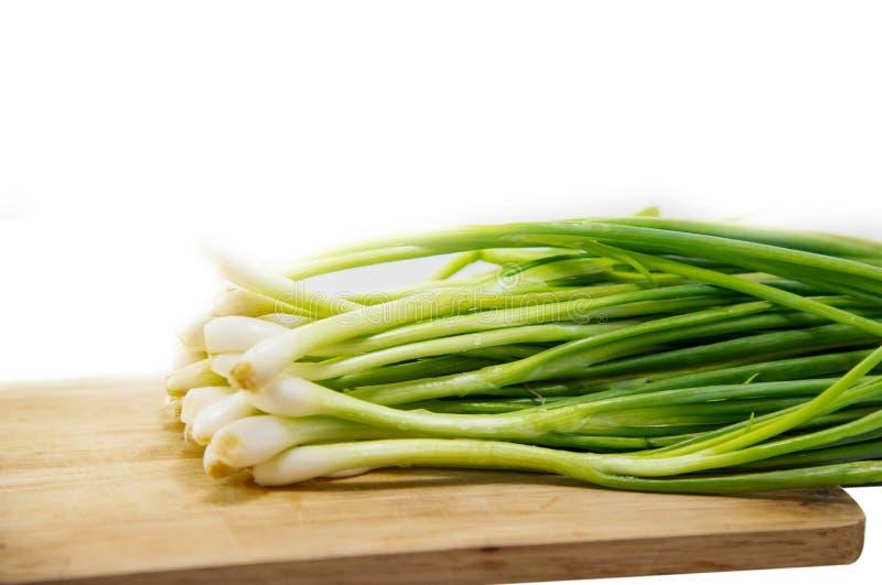 Scallion zielonej cebuli wiosny cebulkowego sałatkowego cebulkowego plika cały korzeń odizolowywający na białym tle fotografia stock