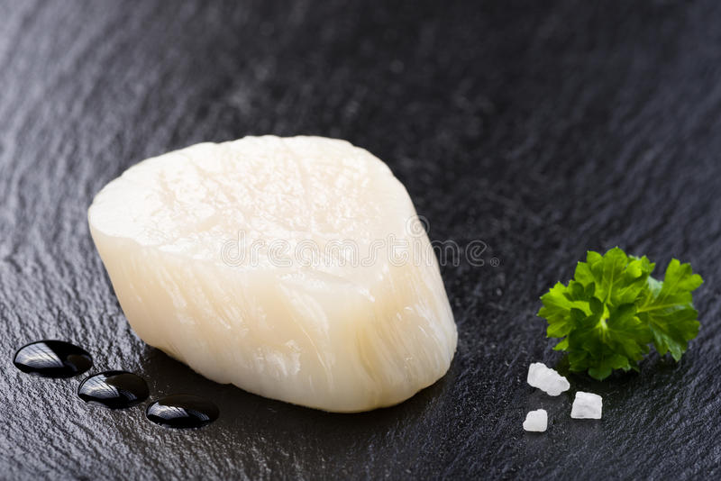 Scallop on black stone plate. Closeup stock photos