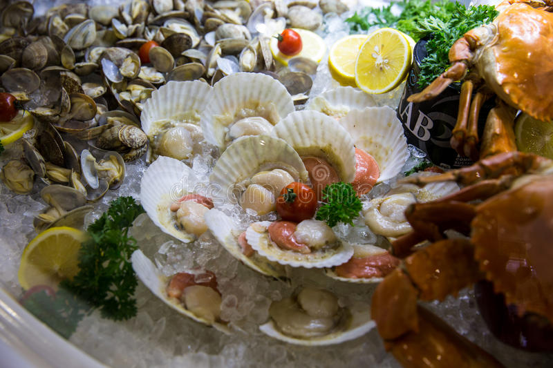 Scallop stock photography