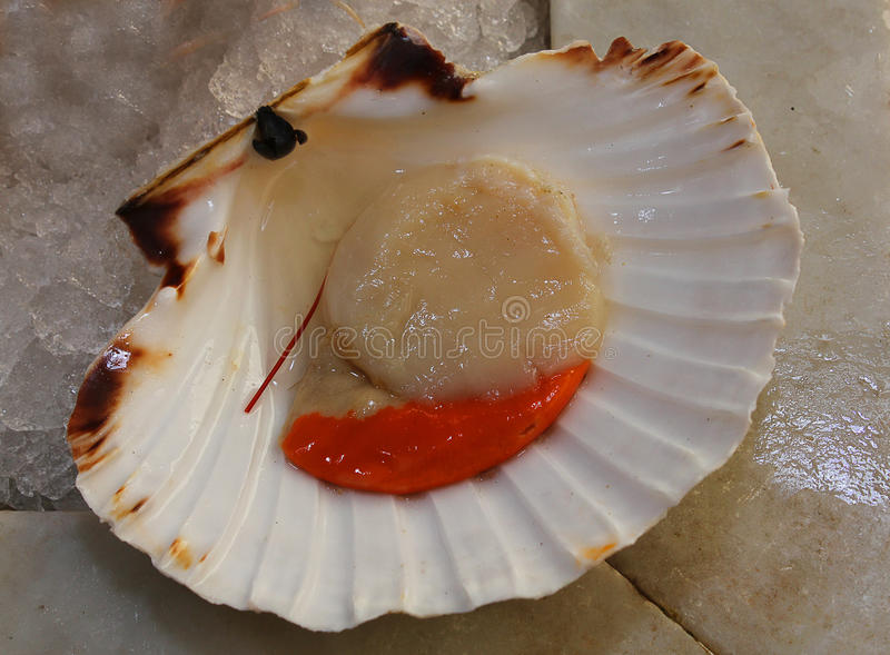 Scallop on ice stock image