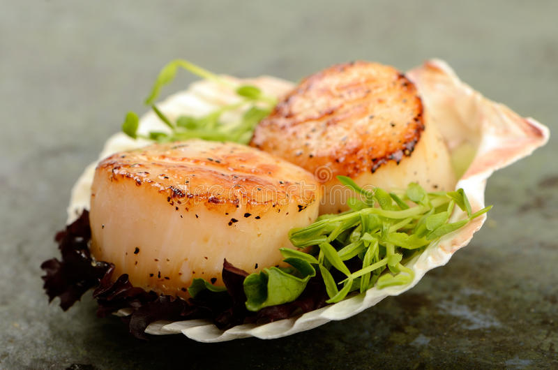 Scallop. A pair of grilled scallop table top food shot stock images
