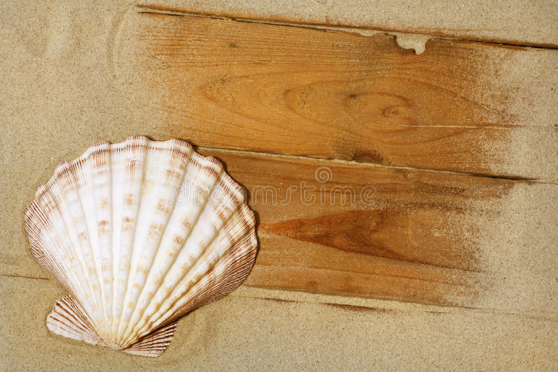 Scallop on sand royalty free stock images