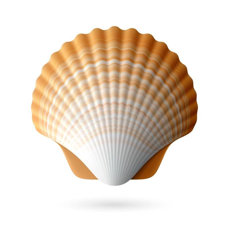 Scallop seashell vector illustration