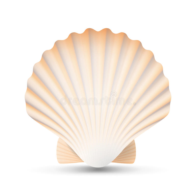 Scallop Seashell Vector. Beauty Exotic Souvenir Scallops Shell Isolated On White Background Illustration stock illustration