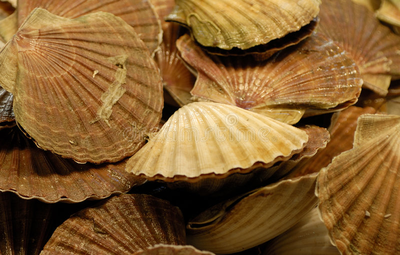 Download Scallops Stock Images - Image: 1468834