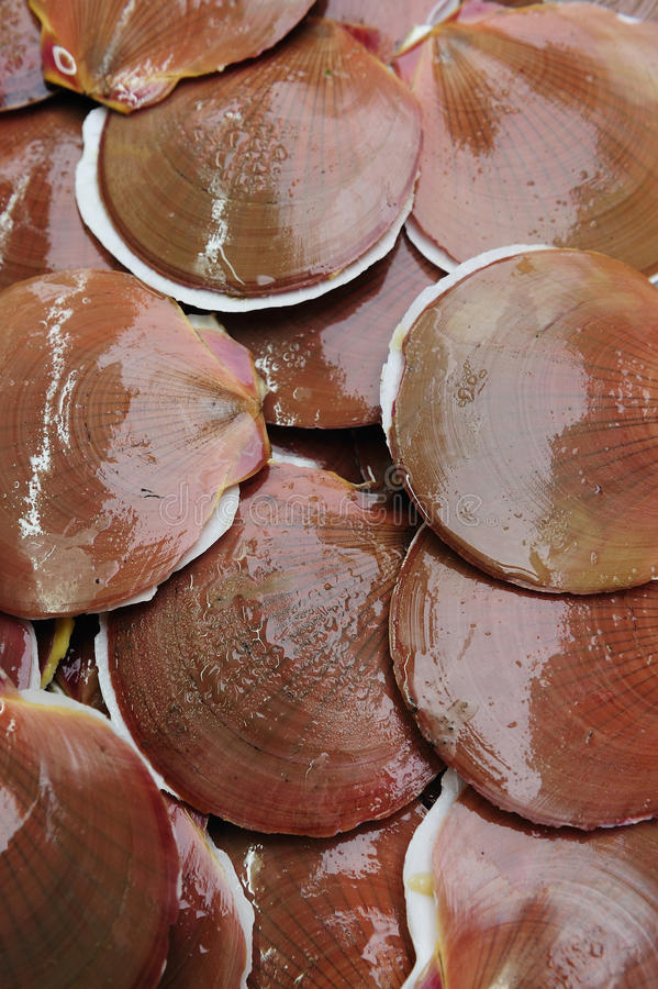Scallops at the market