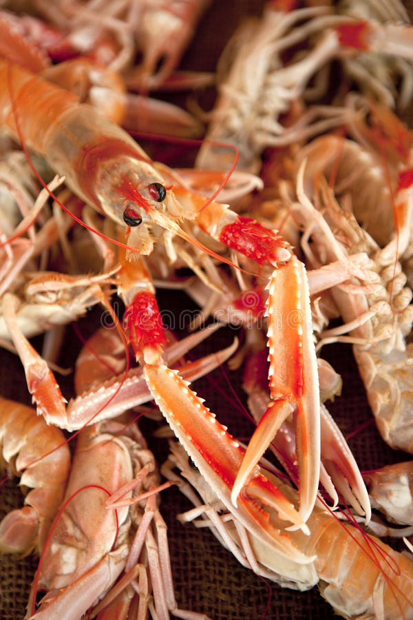 Download Scampi stock photo. Image of stall, cuisine, crustacean - 24557510