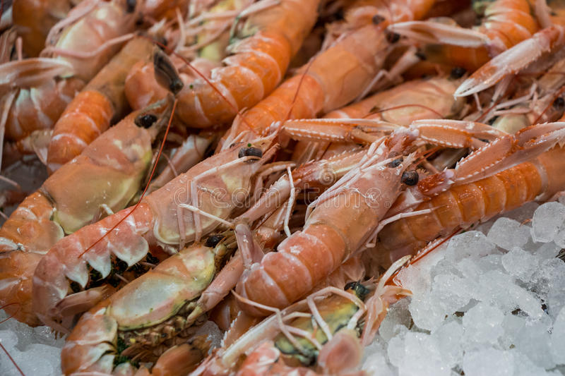 Scampi or Nephrops norvegicus on ice in fish shop. stock photo