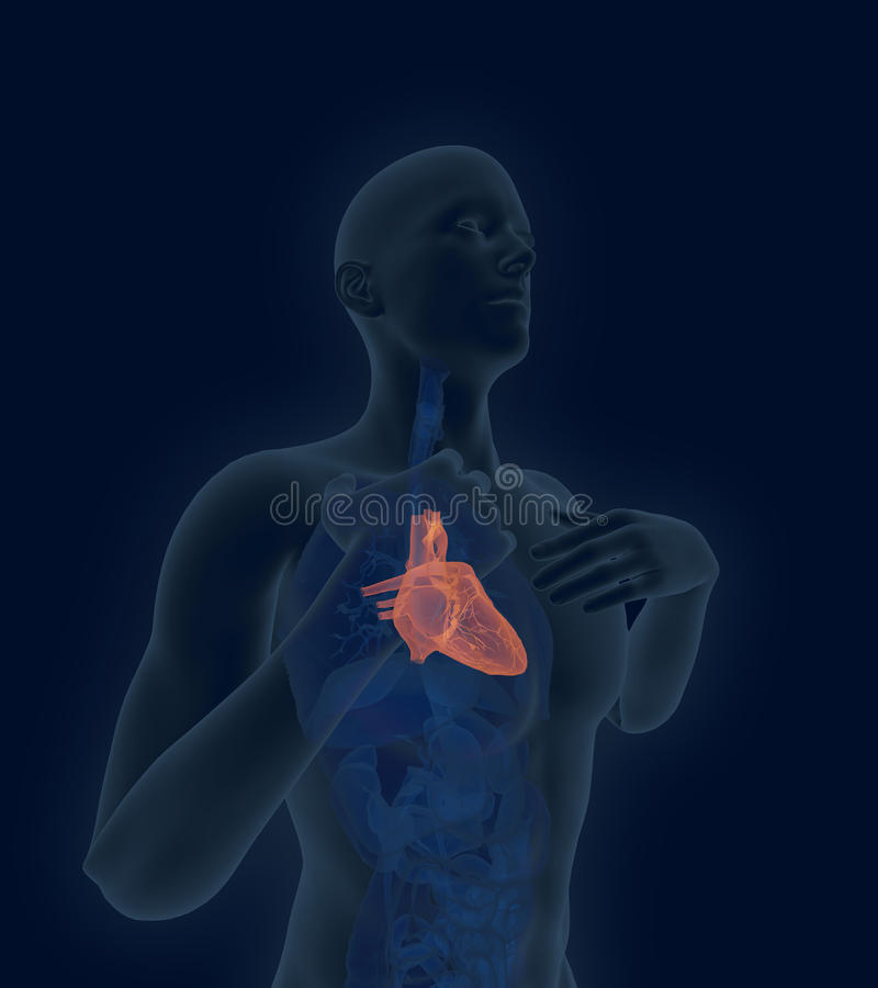Scan of the human heart with coronary artery disease and heart. X-ray scan of the human heart with coronary artery disease and heart pain 3d render vector illustration