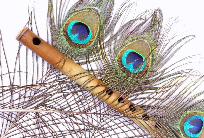 Scanalatura di bambù, piuma del pavone fotografia stock libera da diritti