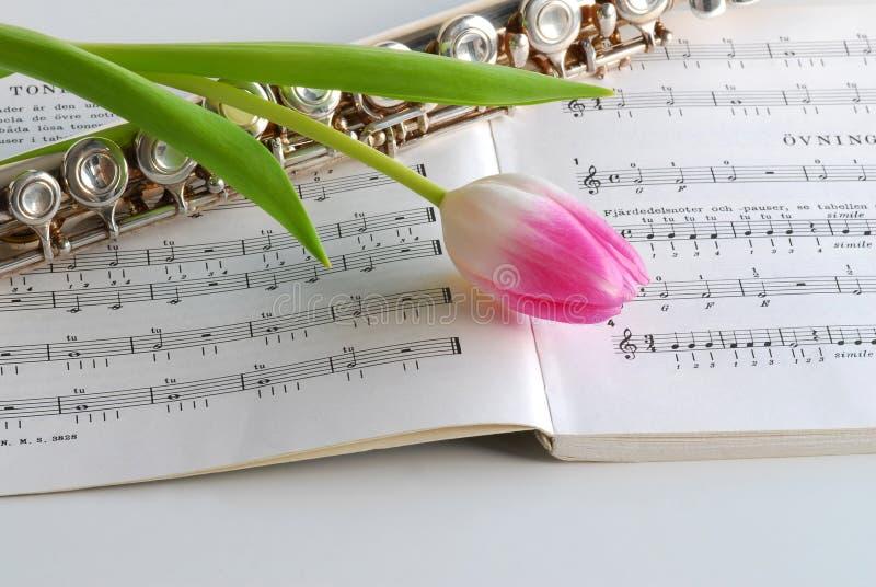 Scanalatura e tulipano fotografie stock libere da diritti