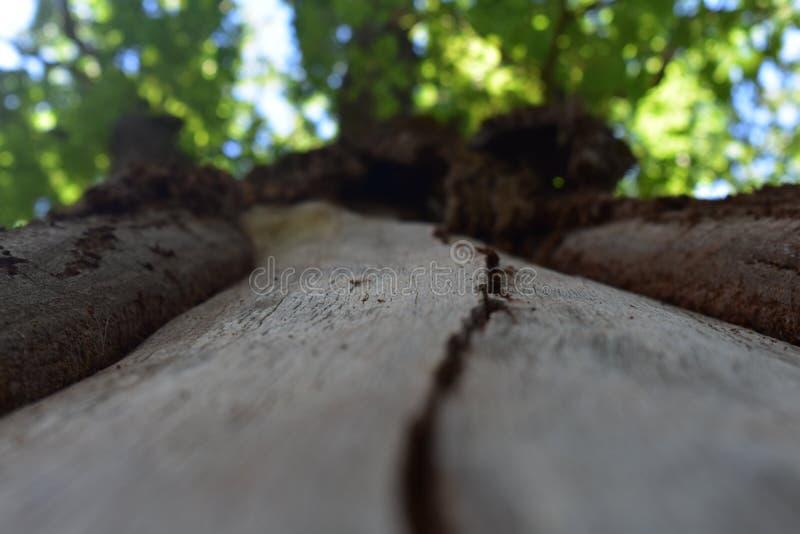 Scanalatura in un albero immagine stock