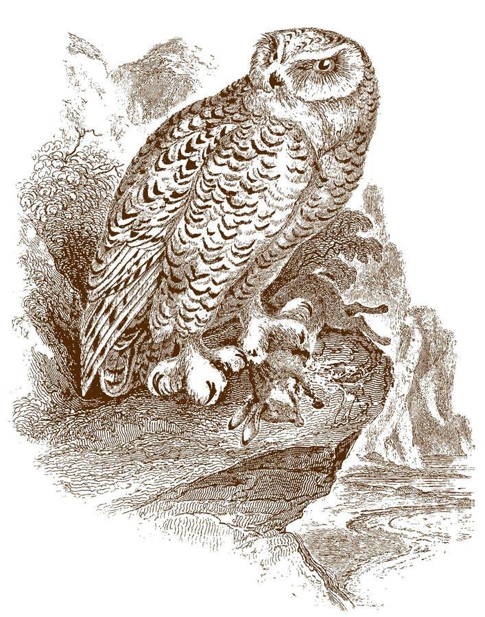 Scandiacus del bubón del búho Nevado que se sienta en una roca y que sostiene un conejo muerto capturado o conejito en su garra libre illustration