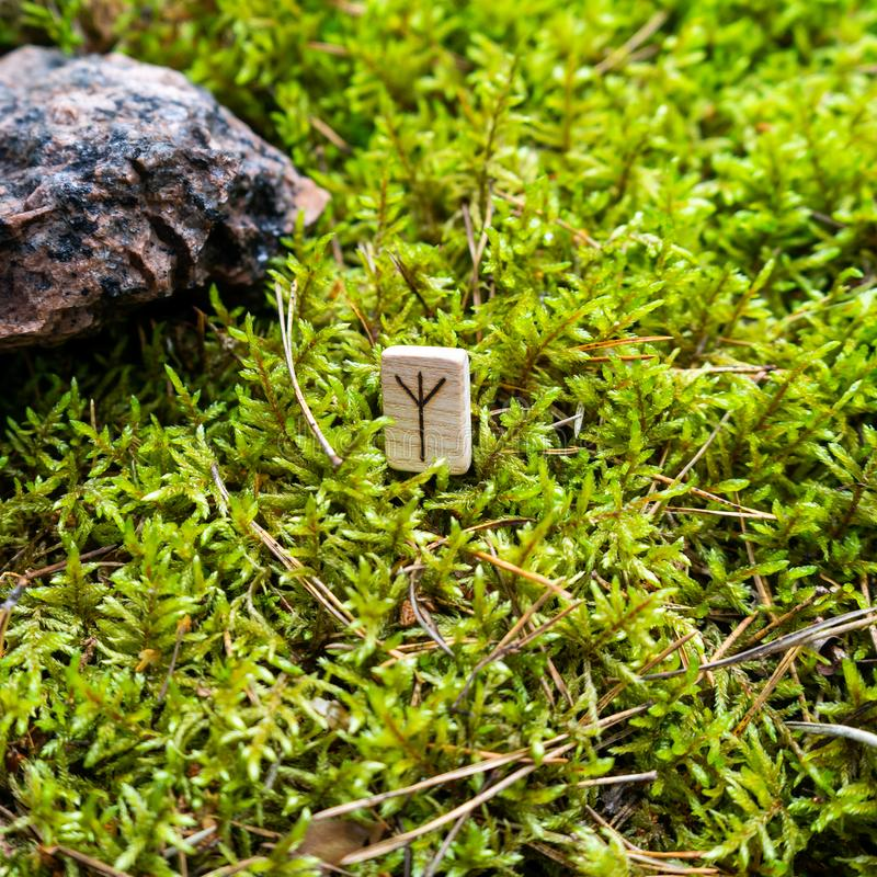 Scandinavian rune Algiz protection, on wet moss. The concept of predicting the future, an ancient way of divination royalty free stock photography