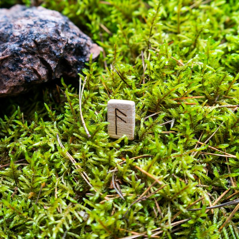 Scandinavian rune Algiz word, advice, on wet moss. The concept of predicting the future, an ancient way of divination royalty free stock photos