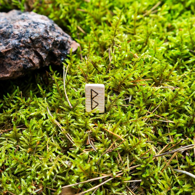 Scandinavian rune of Berkan new idea, baby, on wet moss. The concept of predicting the future, an ancient way of divination royalty free stock images