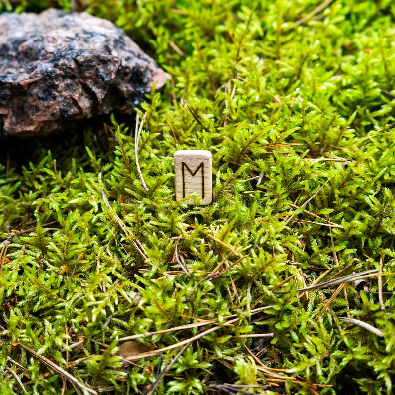 Scandinavian rune Evaz change, on wet moss. The concept of predicting the future, an ancient way of divination royalty free stock photography