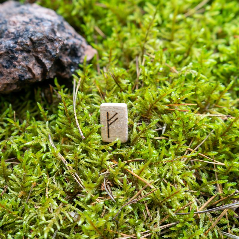 Scandinavian rune Fehu money, on wet moss. The concept of predicting the future, an ancient way of divination royalty free stock photos