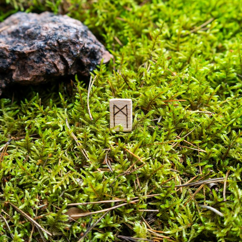 Scandinavian rune Manaz ego on wet moss. The concept of predicting the future, an ancient way of divination stock photo