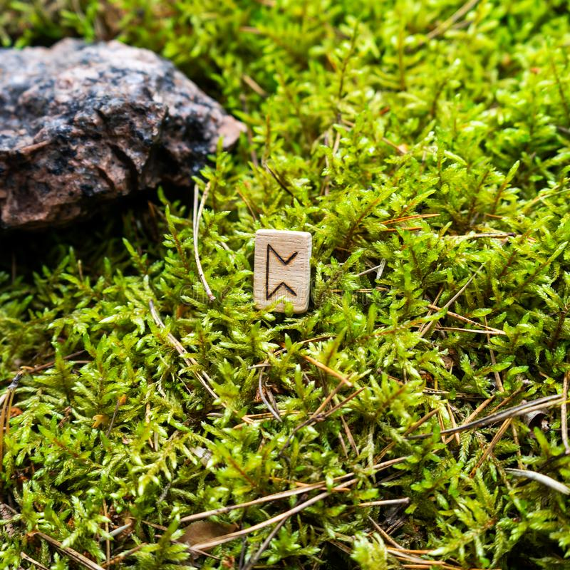 Scandinavian rune Perth love on wet moss. The concept of predicting the future, an ancient way of divination stock images