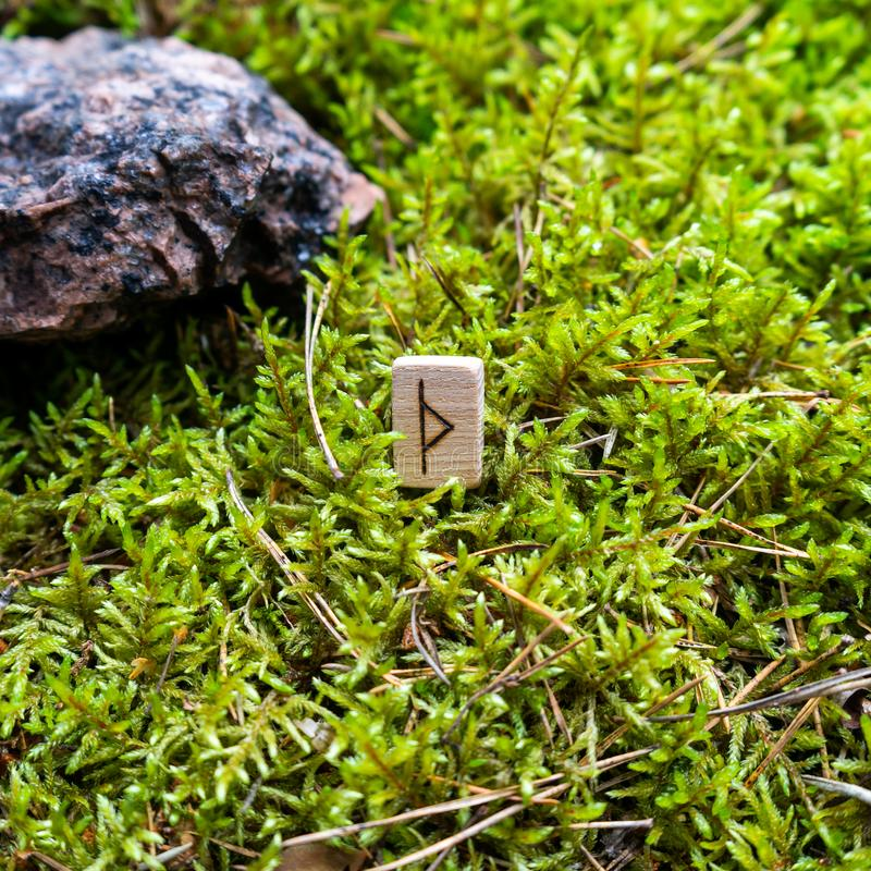 Scandinavian rune Thurisaz tip, on wet moss. The concept of predicting the future, an ancient way of divination stock photo