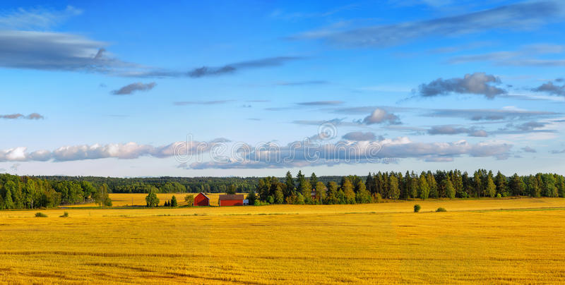 Scandinavian wheat landscape stock photos