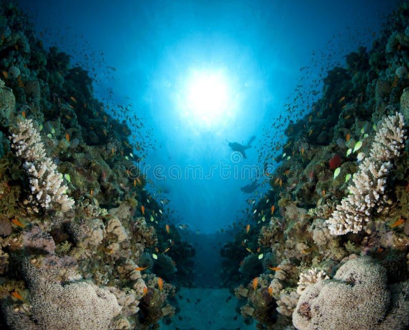 Scape coral com sunball fotografia de stock