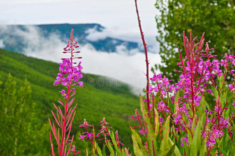 Scape de fleur photo libre de droits