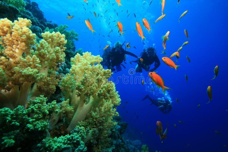 scaphandre de corail de récif de plongeurs photo libre de droits