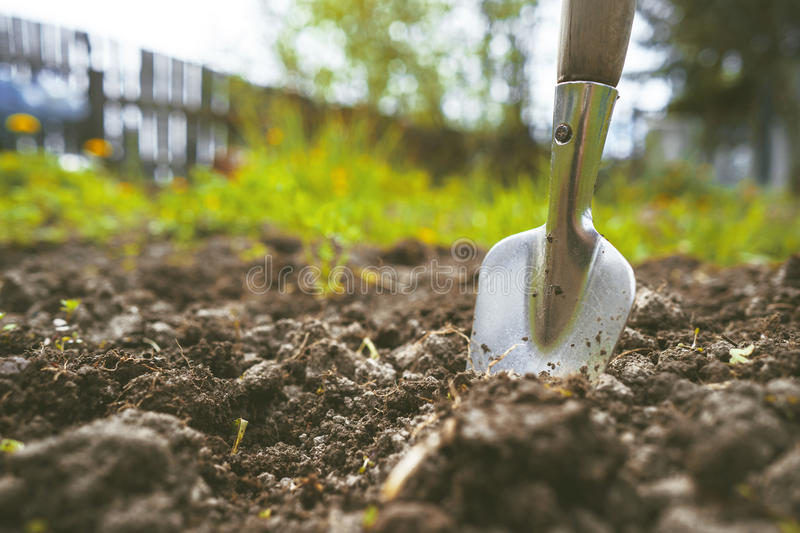 Scapula on the background of fertile soil. Place for the text. The concept of agriculture. Metal garden tools stock photo