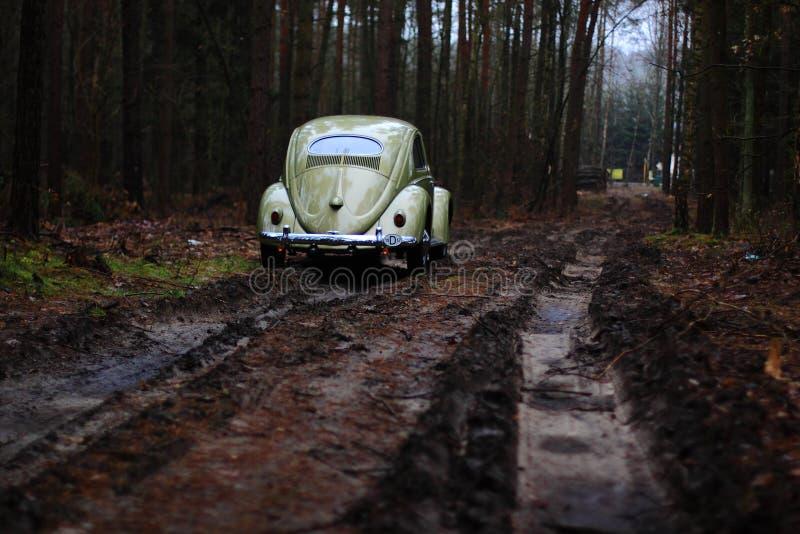 Scarabée 1957 de VW images libres de droits