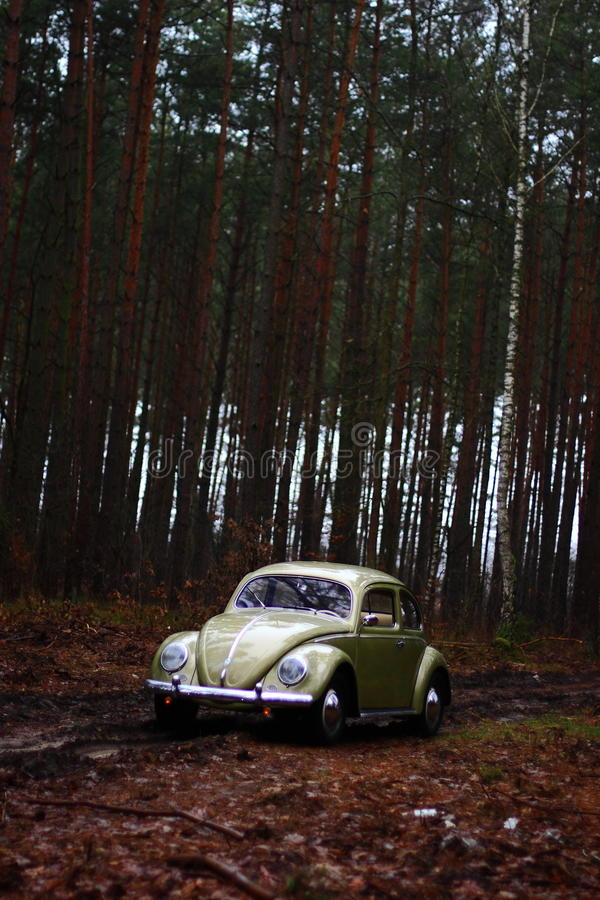 Scarabée 1957 de VW photo stock