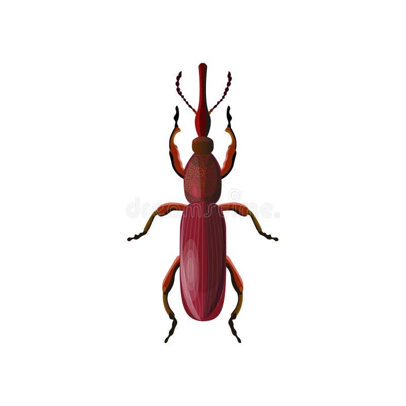 scarabée Droit-foui de charançon illustration stock