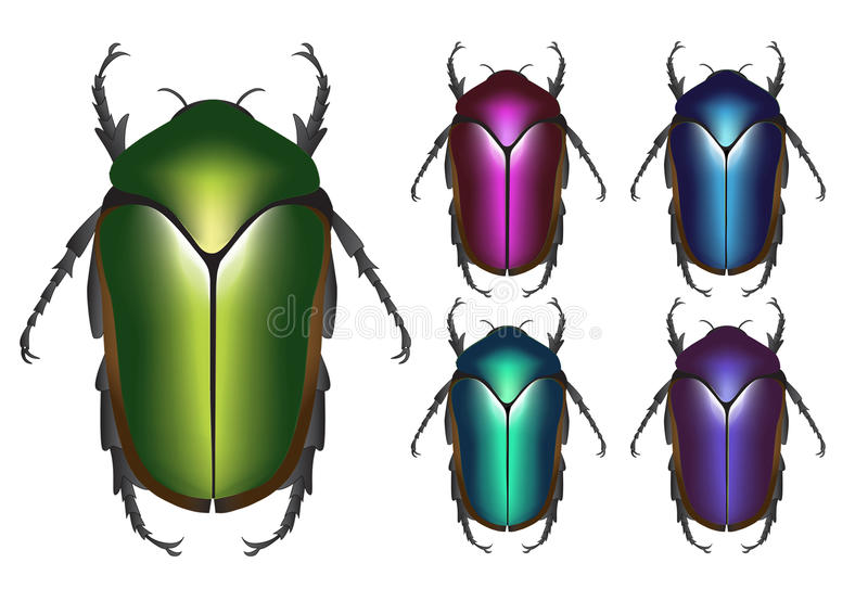 Scarab royalty free illustration