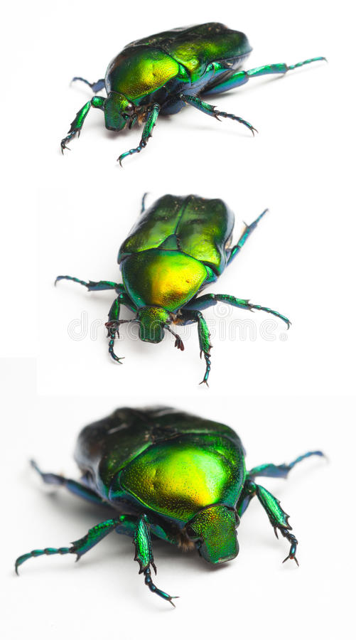 scarab arkivbilder