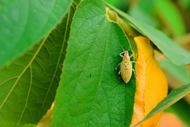 scarab imagens de stock
