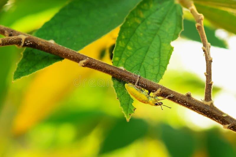 scarab foto de stock