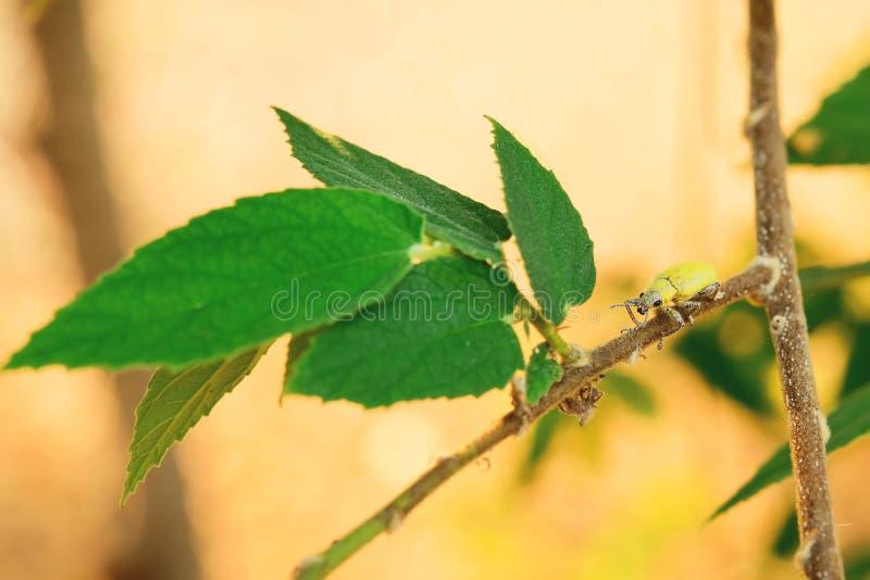 scarab fotografia de stock