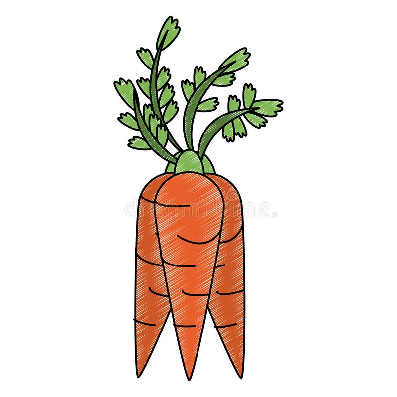 Scarabocchio di verdura fresca delle carote illustrazione di stock