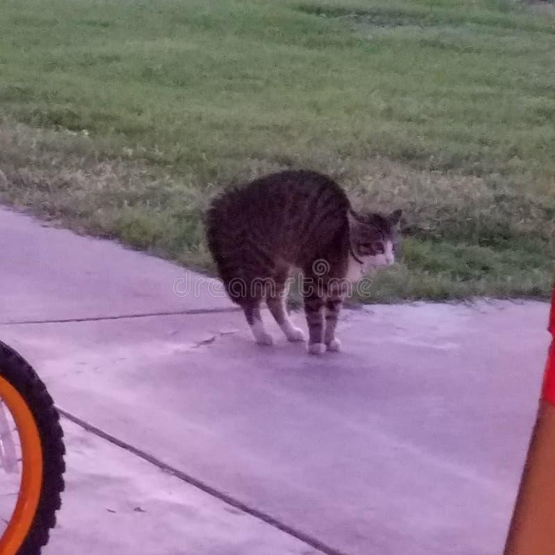 scardy的猫 免版税图库摄影