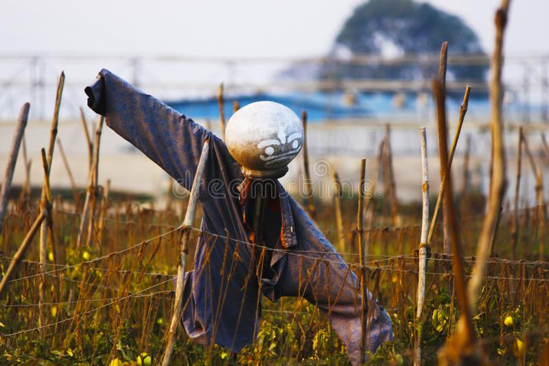Scare crow in the field to protect the crops.  stock image