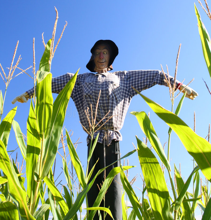 Download Scarecrow stock image. Image of outdoors, farm, green - 6713973