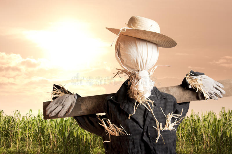 Scarecrow In Corn Field At Sunrise Royalty Free Stock Photos