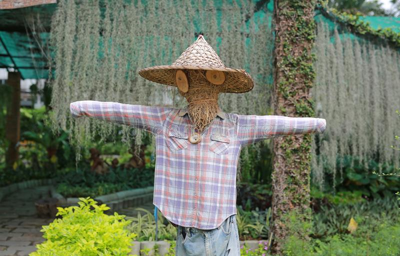 Scarecrow in a farm thailand.  royalty free stock images