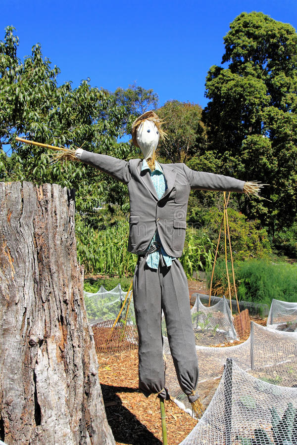 Scarecrow in garden at fall. A male scarecrow dressed with a suit and placed in a garden stock images