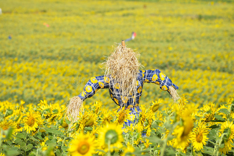 Download Scarecrow Guarding Sunflower Fields Stock Image - Image: 83707039