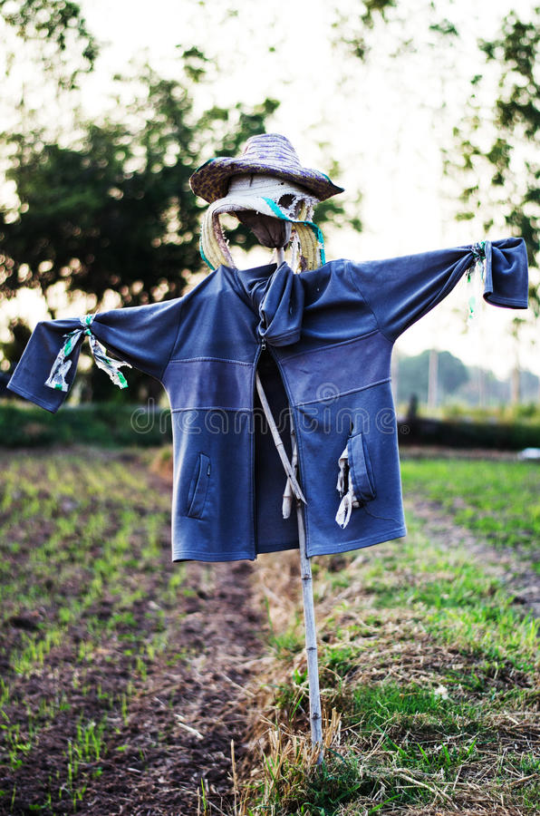 Scarecrow i lantgård royaltyfri fotografi