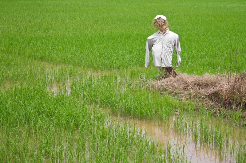 Download Scarecrow Made of Straw, Clothes Torn. Stock Photo - Image of humor, farming: 25830292