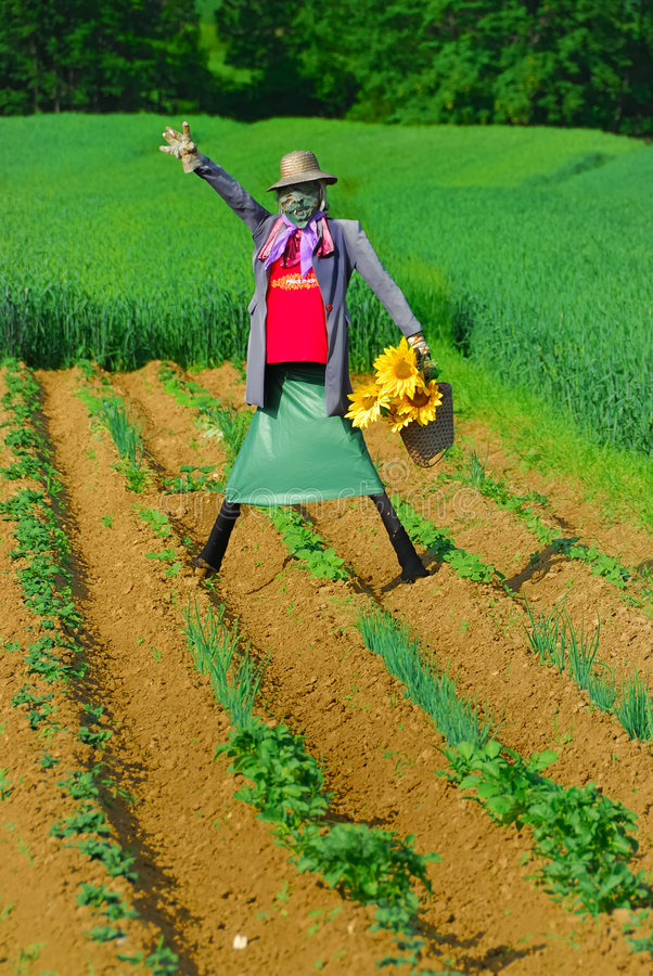 Download Scarecrow no.1 stock photo. Image of plant, ground, person - 5547888
