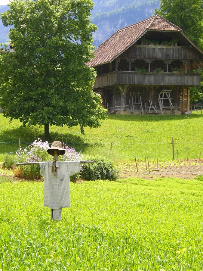 Scarecrow on organic farm. Scarecrow with farmhouse on an organic slow food vegetable farm growing wheat,oats and other crops Switzerland royalty free stock image